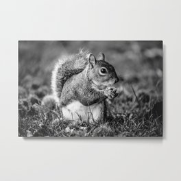 Squirrel Conquer Metal Print