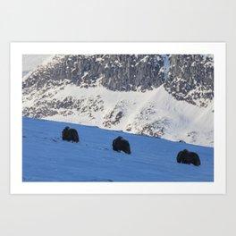 Three Musk Ox Art Print