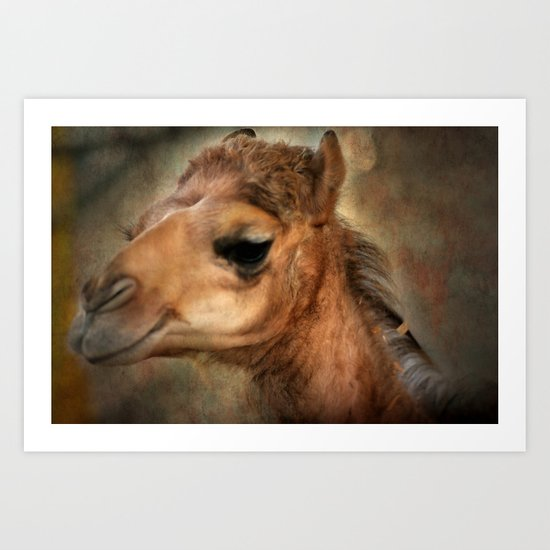 The Camel's Secret Art Print