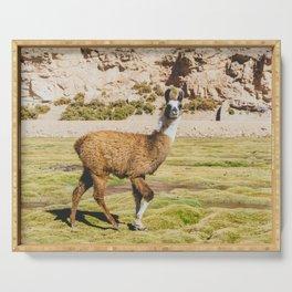 Curious llama in Bolivia Serving Tray