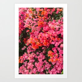 California Blooms Art Print