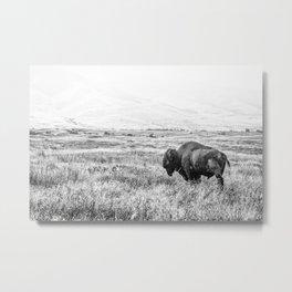 Un Bison Metal Print