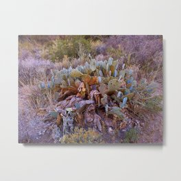 Lifecycle of Prickly Pear Cactuses Metal Print