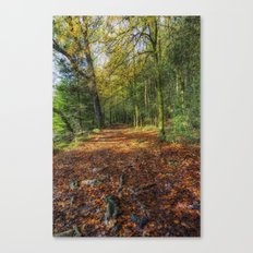 Autumn Forest Walks Canvas Print