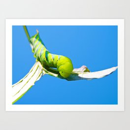 Green Fruitworm Art Print