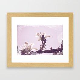 Hesperaloe parviflora Flower in Lavender Ice Framed Art Print