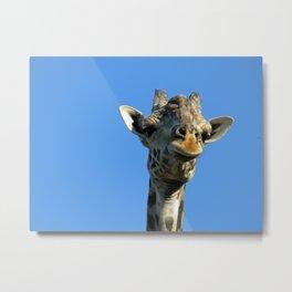 Giraffe Metal Print