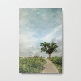 Windswept Tree on Barrier Island North Carolina Metal Print