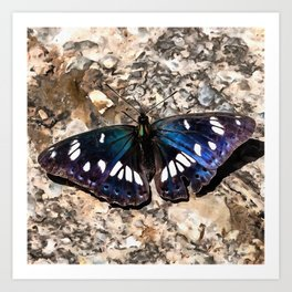 Southern White Admiral On Stone Butterfly Portrait Art Print