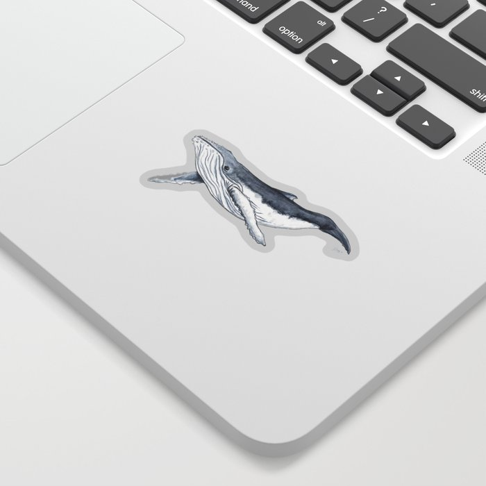 Baby humpback whale (Megaptera novaeangliae) Sticker