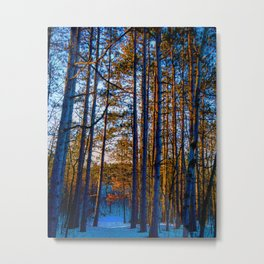 Forest At Sunset Metal Print