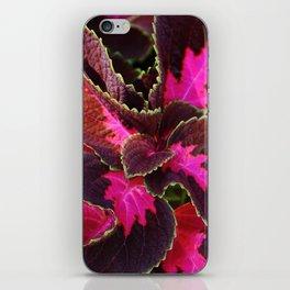 Intricate Coleus Design iPhone Skin
