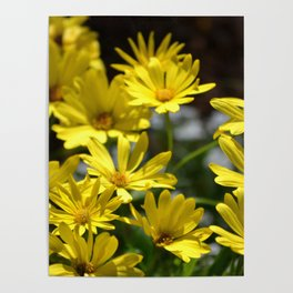 Delightful Little Yellow Daisies Poster