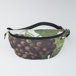 Mourvaison printed in 1910 by Jules Troncy (1855-1915) a vintage lithograph of fresh cluster of grapes Fanny Pack