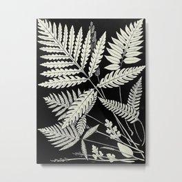 Ferns and evergreens of New England-Edward Knobel - 1895 Leaves Black & White Ink Pattern Metal Print