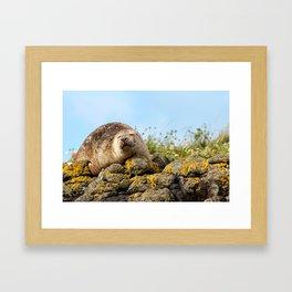 Seal at Dunvegan Castle, Scotland Framed Art Print