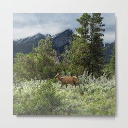 Mountains and Deer Photography | Jasper | Alberta | Travel Art Print | Adventure Metal Print