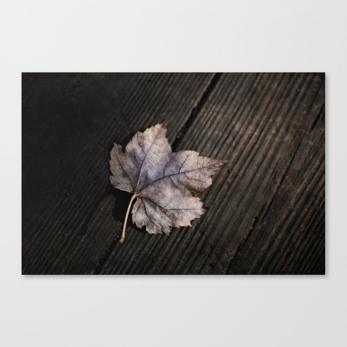 the lifelines of fall Canvas Print