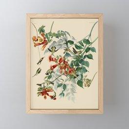 Vintage Hummingbird Illustration - Birds of America Framed Mini Art Print