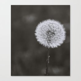 Wishes -Unplucked Canvas Print