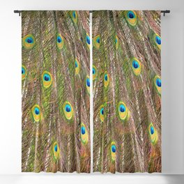 Colorful Peacock Feathers, Abstract Nature Texture Blackout Curtain