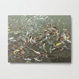 Coi Fish Metal Print
