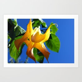 Angel Trumpet in Summer Art Print