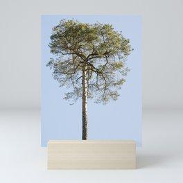 Coniferous Tree Series 1 of 3 Mini Art Print