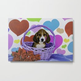 Beagle Puppy Sitting in a Purple Basket with Valentine's Day Heart Background Metal Print
