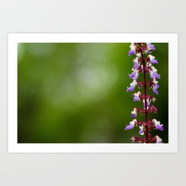 Every flower is a soul blossoming in nature. Art Print