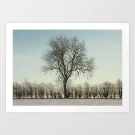 Winter tree in the low sun Art Print