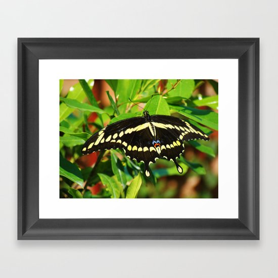 A Pretty Butterfly Framed Art Print