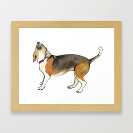 Chipper the beagle Framed Art Print