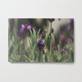 Lavender III Metal Print