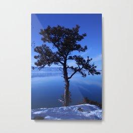 Pine Tree silhouette on Blue Metal Print