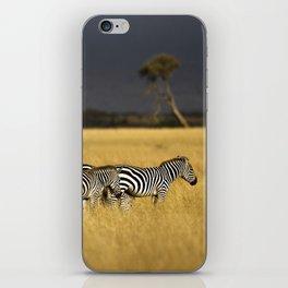 Zebra in Afternoon Light iPhone Skin