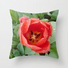 Flower - Tulip Throw Pillow