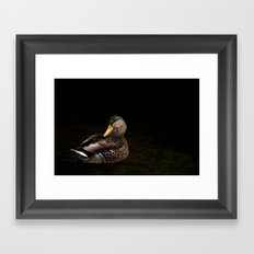 Summers Mallard Framed Art Print