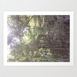 Santa Cruz woods Original Picture  Art Print