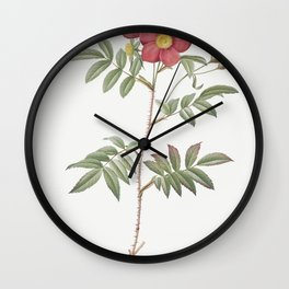 Red-Leaved Rose also known as Rose Tree with Red Stems and Spines (Rosa redutea glauca) from Les Ros Wall Clock