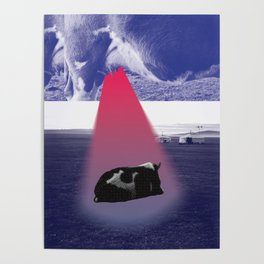 Mother cow Poster