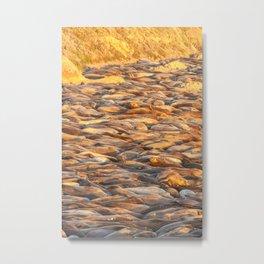 Sleeping Seals vertical Metal Print