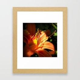 Orange Lilly  Framed Art Print