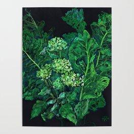 Hydrangea and Horseradish, black and green Poster