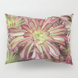 Looks Like a Rose Succulent Pillow Sham