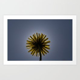 yellow spring dandelion Art Print