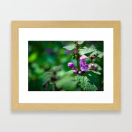 Photo of Ground-ivy flower on a green background taken in Austrian Alps Framed Art Print