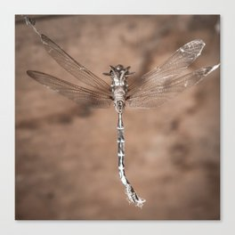 Dragonfly Strung Up Canvas Print