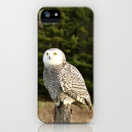 In Awe iPhone Case