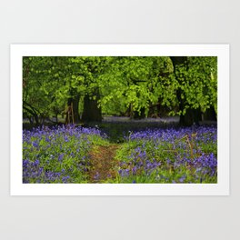 bluebell forest in england Art Print